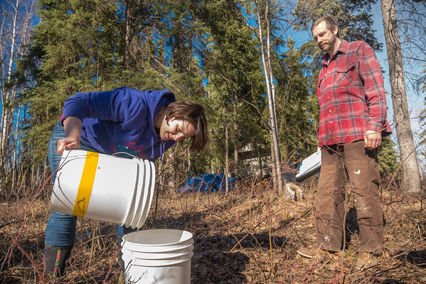 """Nicole Dunham and Shaun Johnson with OneTree Alaska collect birch sap from trees behind the chancellor's residence on the UAF campus. OneTree Alaska is an education and outreach program of the University of Alaska Fairbanks School of Natural Resources and Extension.  <div class=""""ss-paypal-button"""">Filename: AAR-16-4874-083.jpg</div><div class=""""ss-paypal-button-end""""></div>"""
