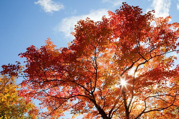 Fall foliage, coast of Maine
