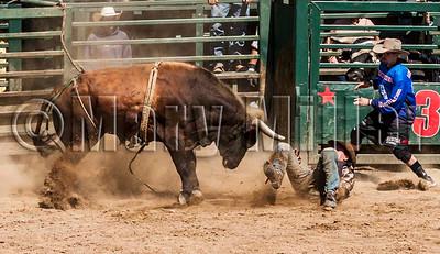 Advantage Bull