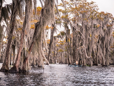 Into the Cypress