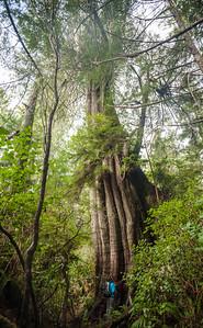 Meares Island, Tofino, Vancouver Island, British Columbia