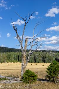 Dead tree in Maniti Park..