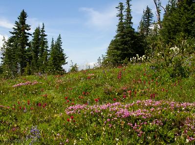 Flowers at Windy Gap summit.