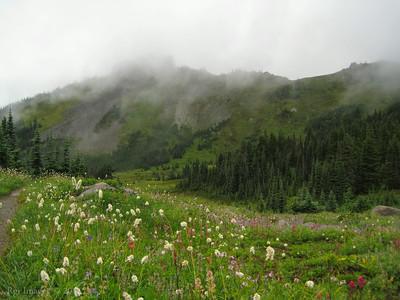 A Misty Mount Pleasant.