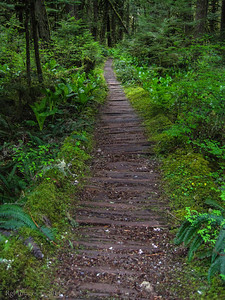 The old plank trail.