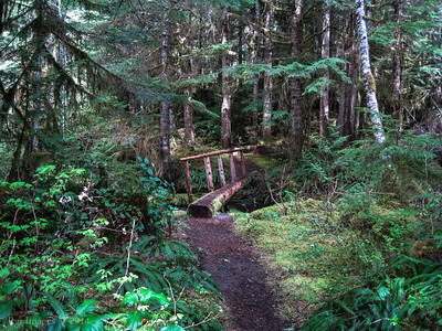 Trail to Chenuis Falls,