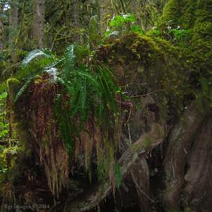 Lush rain forest.