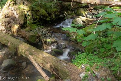 Old foot bridge on Huckleberry creek trail
