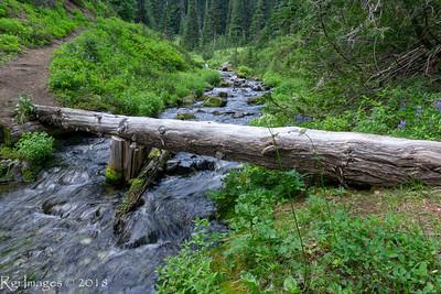 Huckleberry creek trail