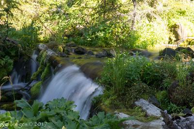 Creek in Seattle Park
