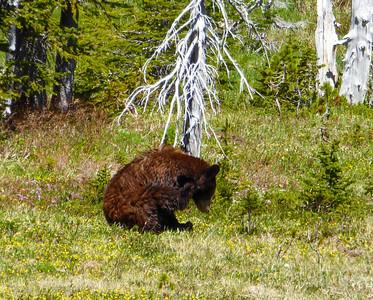 The Bear of Mystic Lake.