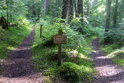 St. Andrews Creek trail- perhaps my favorite obscure trail in the park.