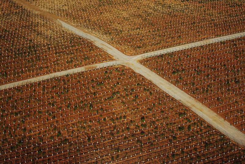 An unexpected cross appears between young saplings planted in Spain