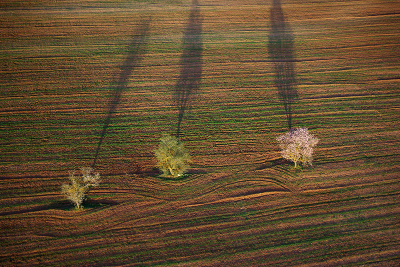 Tree shadows project on to land.