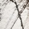 Tracks in snow Montgomeryshire Wales