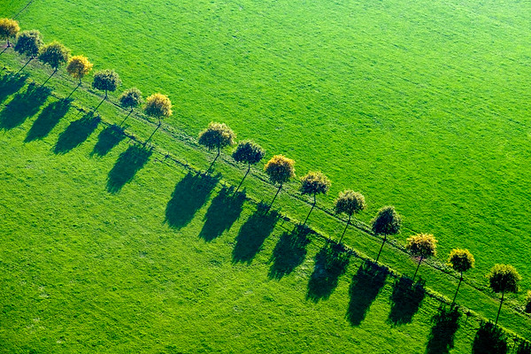Tree shadows across Flanders Fields, Belgium