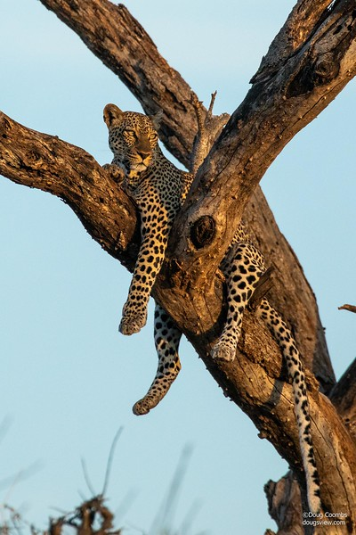 Samburu Reserve