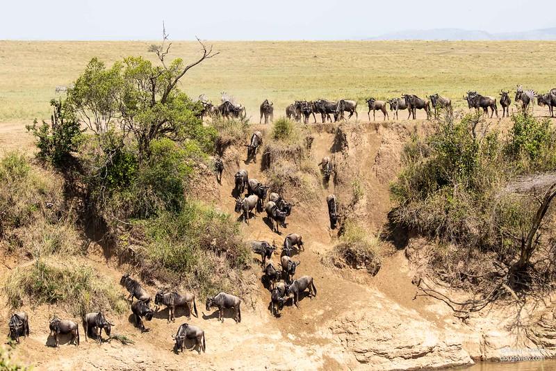 Maasai Mara Reserve