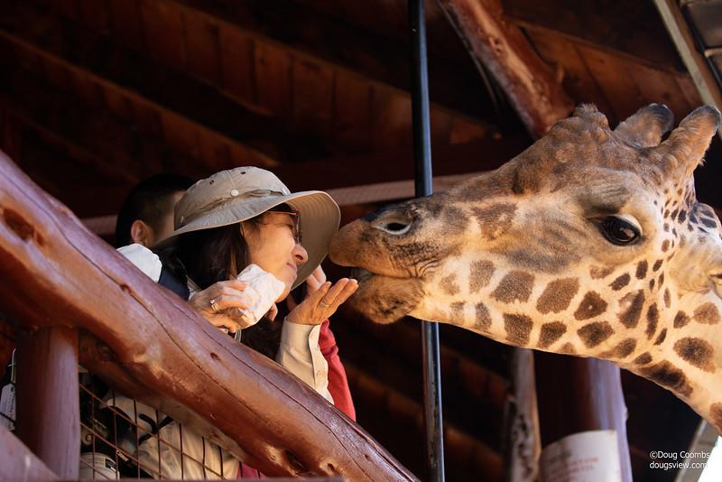 Karen Blixen Giraffe Center