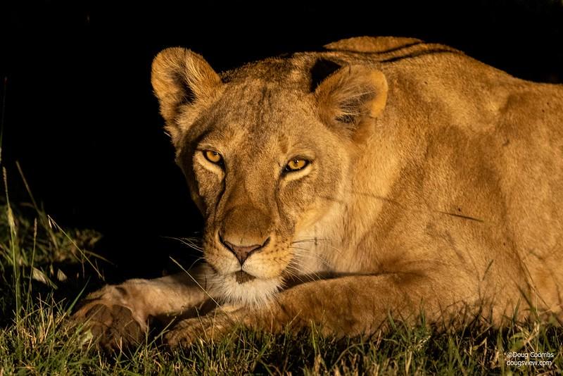 Spirit of Masai Mara