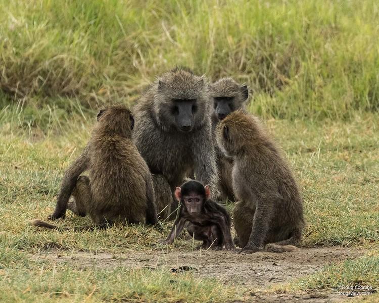 Lake Nakuru Reserve