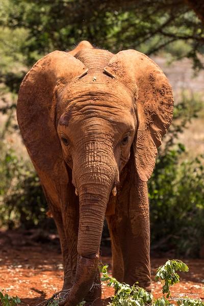 Daphne Sheldrick Elephant Orphanage