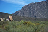 Fynbos and sandstone scree along the lower slope - up to the rocky scarp face of the Blue Mountains - Western Cape (province).