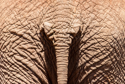 Elephant De-Tail
