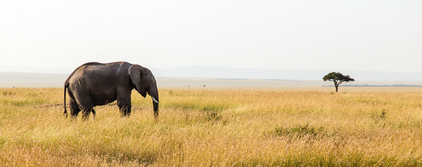 Icons of the Mara