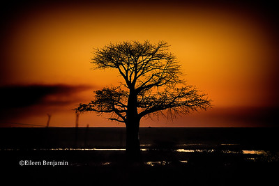 Sunset in Chobe National Park