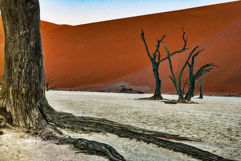 Deadviei Pan - Namib-Naukluft National Park, Namibia