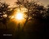 Himba woman - Kaokoland, Namibia