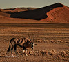 Oryx in Sossusviei dunes - Namib-Naukluft National, Namibia