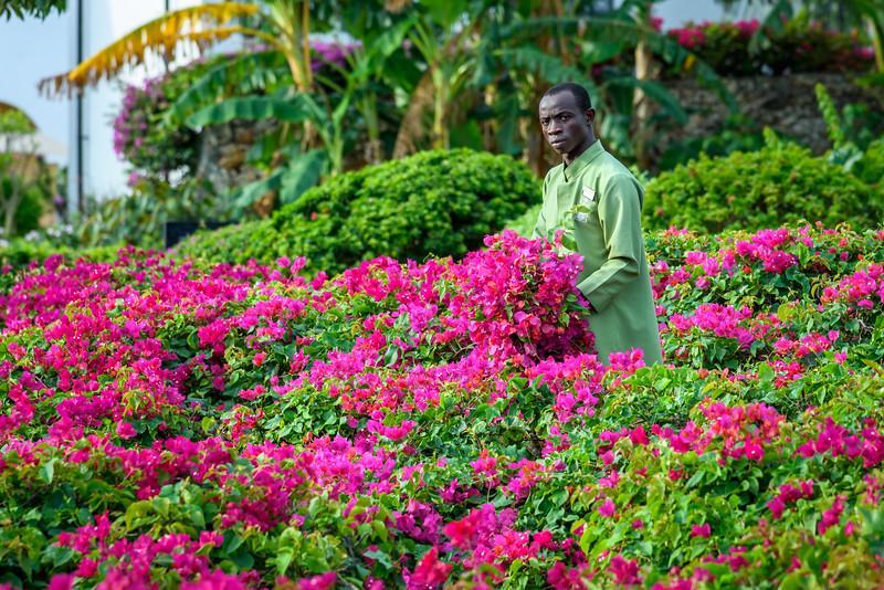 Tending the flowers, Nungwi Resort, Zanzibar
