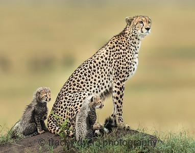Cheetah lookout mound