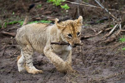 Cub Playing Catch