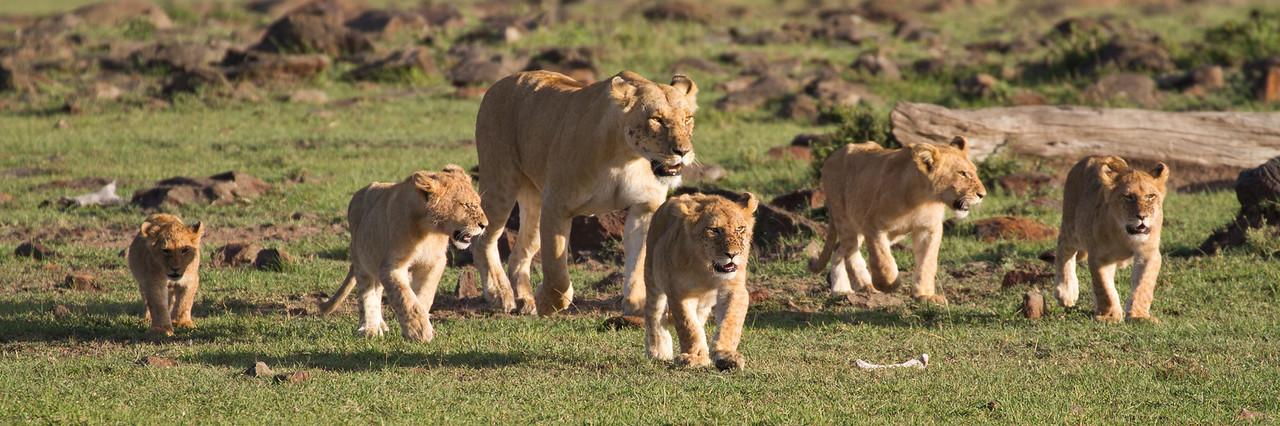 Family stroll.