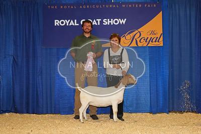 RAWF 2015 Boer Goat Show Champions