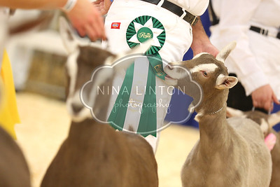 RAWF 2015 Dairy Goat Show Candids