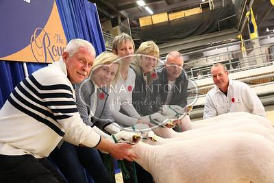 RAWF 2015 Market Lamb Show Candids