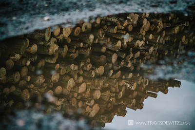 Stacked Log Pile Mud Puddle Reflection