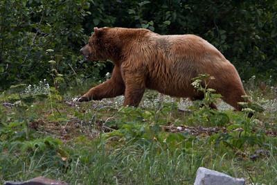 alaska 2010-0973