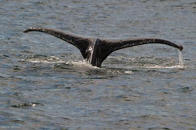 alaska 2010-9671