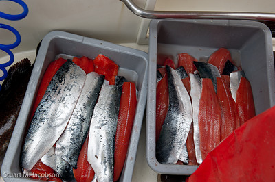 The day's catch after our master filet'er has his way with them. All salmon: Kings, Silvers, and pinks.