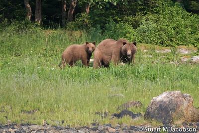 Alaska2015-9489
