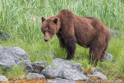 Alaska2015-9372
