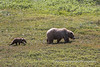 Grizzly Mom & Cubs (2 of 5)