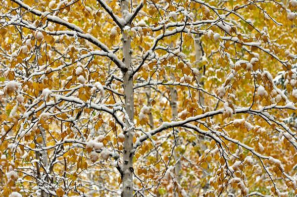 Autumn's Winter