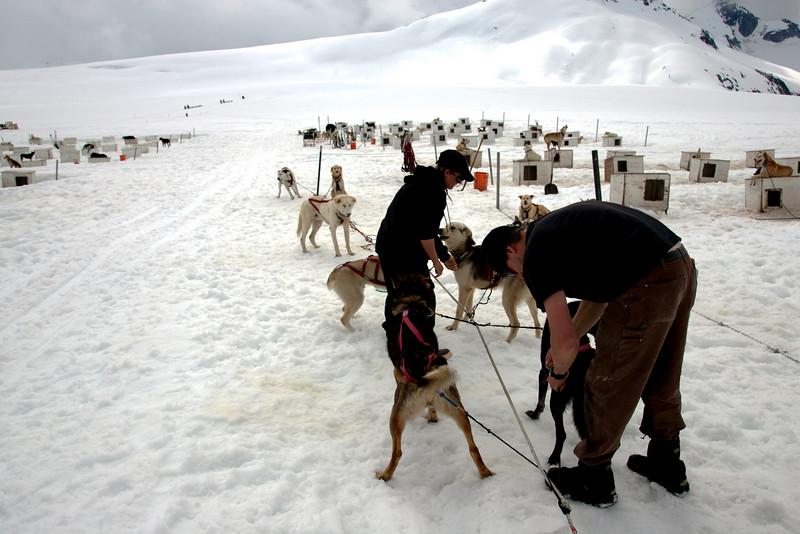 Dog Mush - Prepping Team