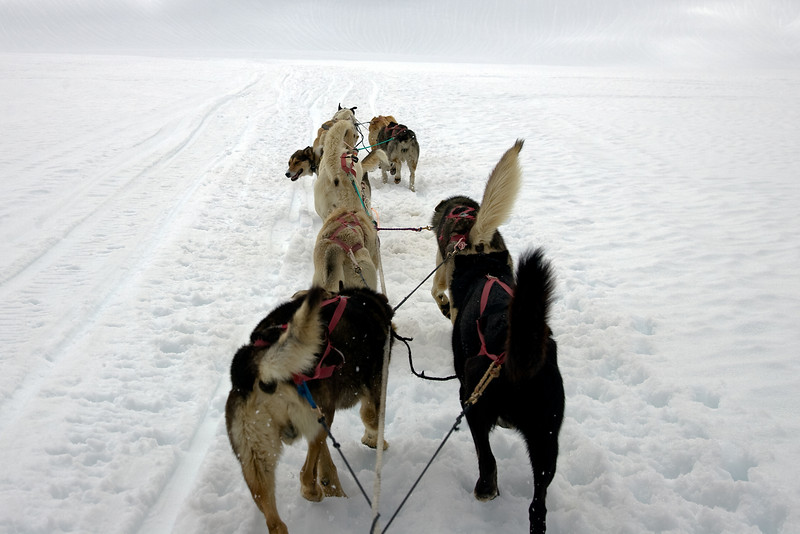 View from our sled on dog mush